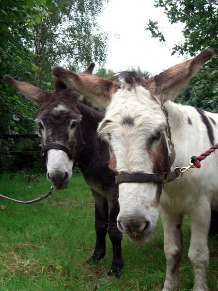 Reitferien In Irland Esel